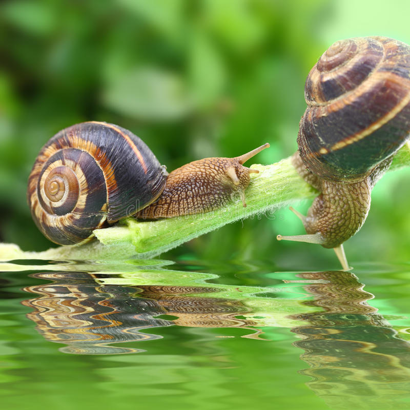 Snails crawling on plant stock images