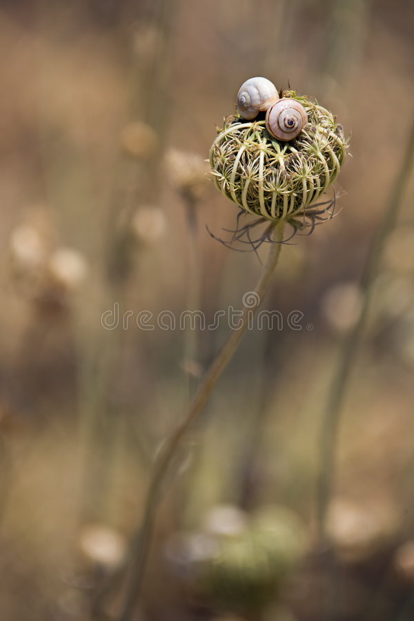 Snails on flower