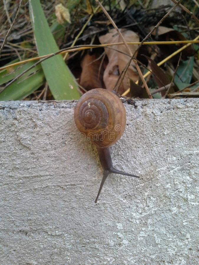 Snails garden. Snails crawl in the garden after raining day royalty free stock photography