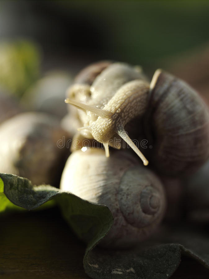 Download Snails on the leaf stock image. Image of texture, green - 10578621