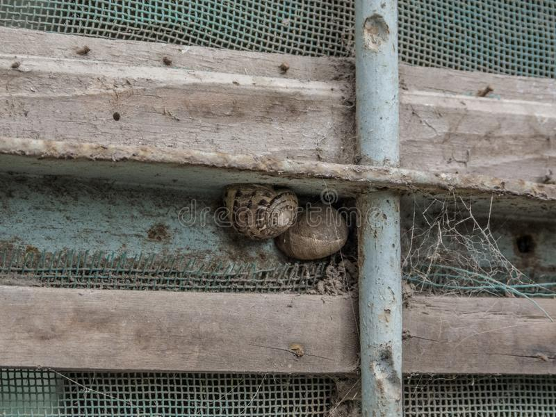 Snails in an old rustic window royalty free stock photo