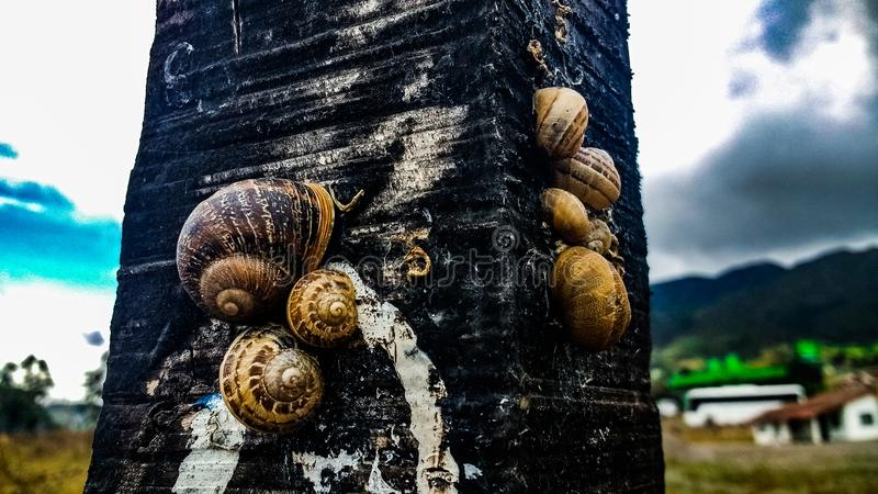 Snails& x27;propety镇自然昆虫 库存照片