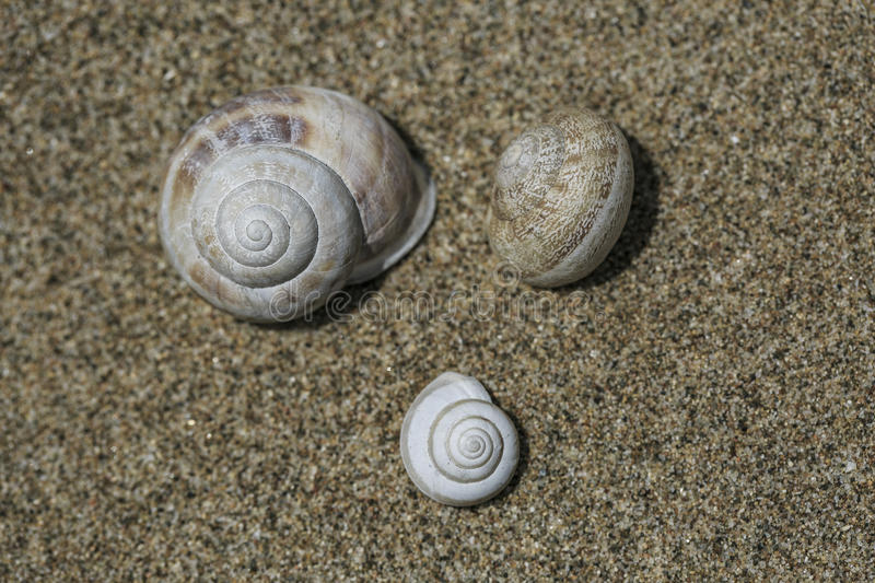 3 snails on the sand. 3 little snails on the sand royalty free stock photography