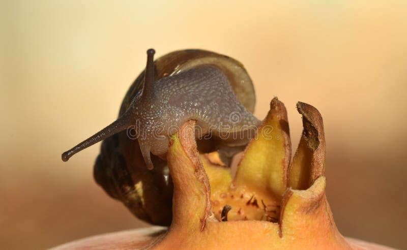 Snails And Slugs, Invertebrate, Fauna, Snail stock photography