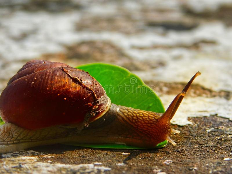 Snails And Slugs, Molluscs, Snail, Slug stock image