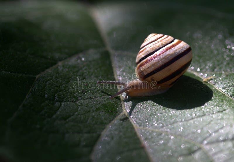 Snails And Slugs, Snail, Invertebrate, Macro Photography stock photography