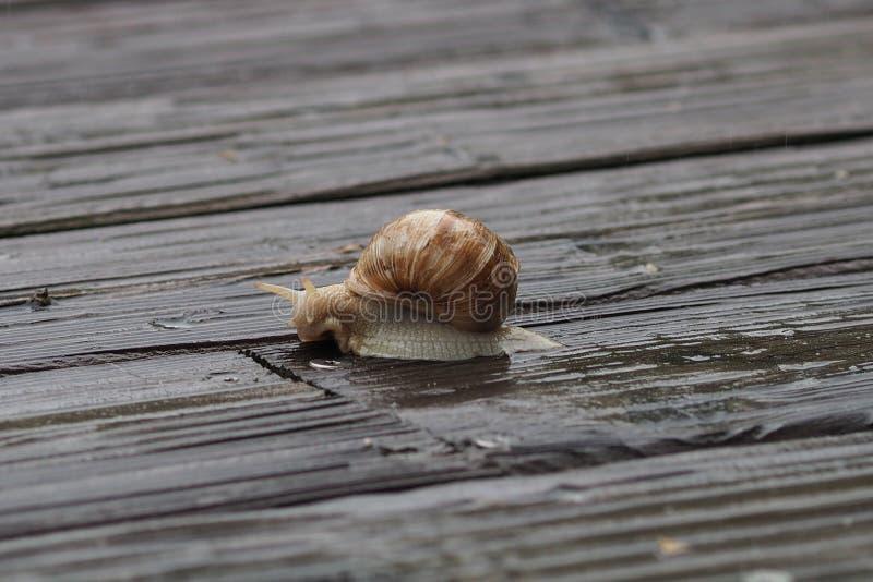 Snails And Slugs, Snail, Invertebrate, Molluscs stock photos