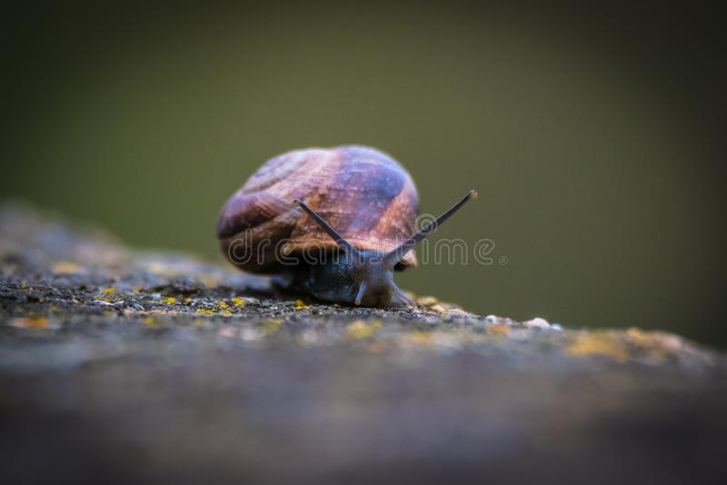 Snails And Slugs, Snail, Invertebrate, Molluscs royalty free stock photography