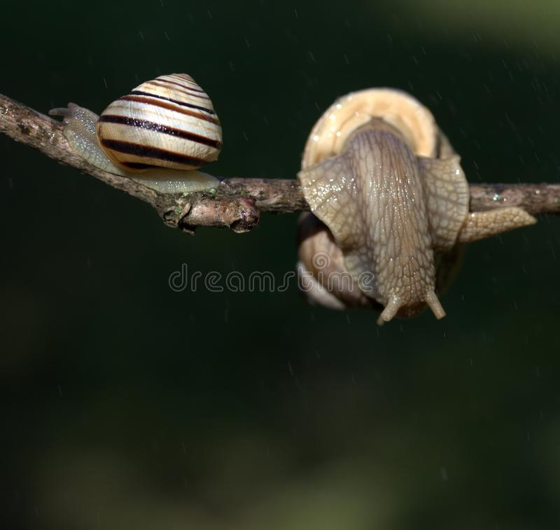 Snails And Slugs, Snail, Molluscs, Fauna Free Public Domain Cc0 Image