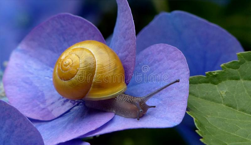 Snails And Slugs, Snail, Molluscs, Invertebrate stock photos