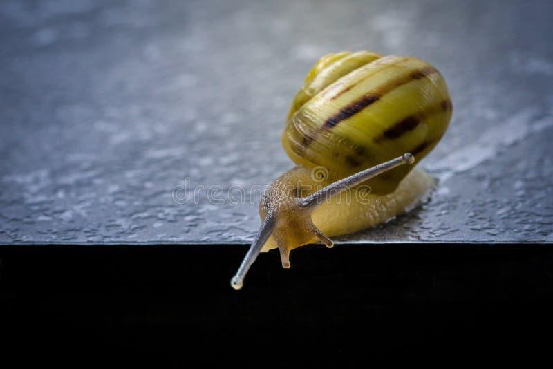 Snails And Slugs, Snail, Molluscs, Invertebrate stock images