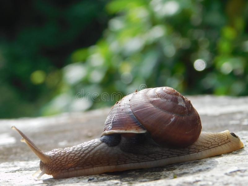 Snails And Slugs, Snail, Molluscs, Slug stock image