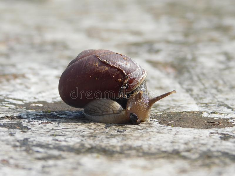 Snails And Slugs, Snail, Molluscs, Slug stock photos
