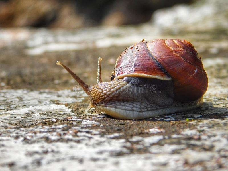 Snails And Slugs, Snail, Slug, Molluscs royalty free stock photo