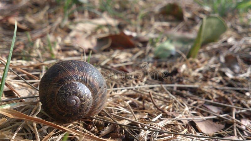 Snails And Slugs, Snail, Terrestrial Animal, Fauna stock image