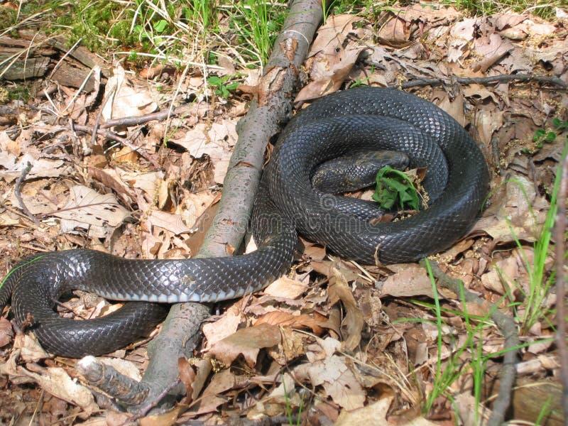 Download Snake Stock Images - Image: 8334