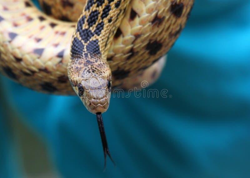 Download Snake stock image. Image of deadly, dangerous, biology - 23265615