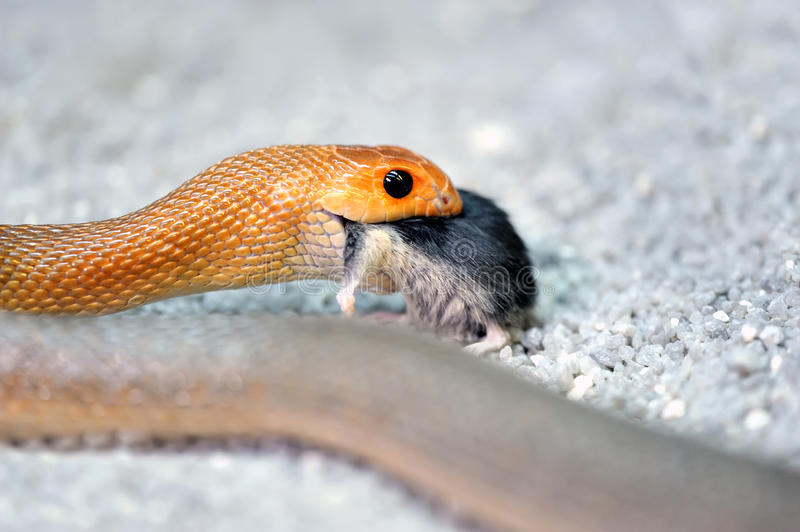 Download Snake stock photo. Image of fauna, young, animals, sand - 23468694