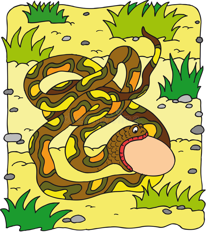 Free Snake Stock Image - 7962851