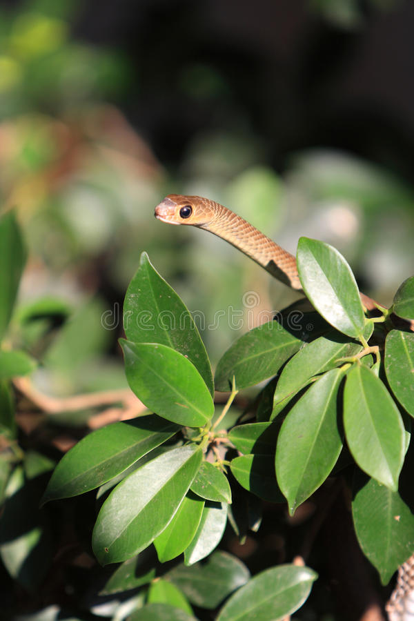 Download Snake in the bushes stock photo. Image of green, plants - 27983426