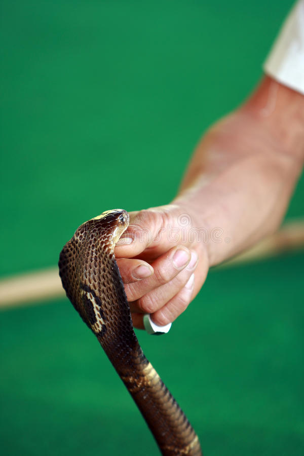 Snake Charmer stock photos
