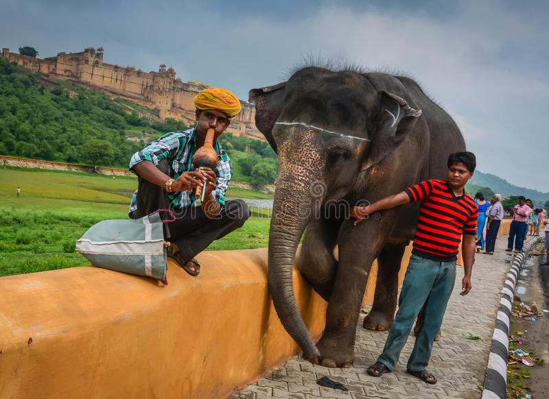 Snake Charmer and Elephant Man. An Indian snake charmer, blowing on a flute-like gourd instrument called a pungi or been, sits on a yellow gold concrete wall stock photos