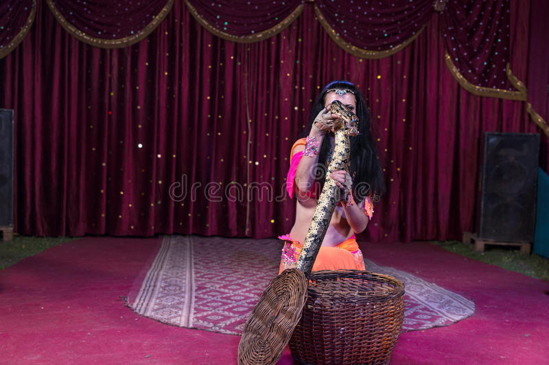 Snake Charmer Removing Large Snake from Basket. Exotic Dark Haired Snake Charmer Removing Large Snake from Basket While Kneeling on Stage with Red Curtain in royalty free stock images