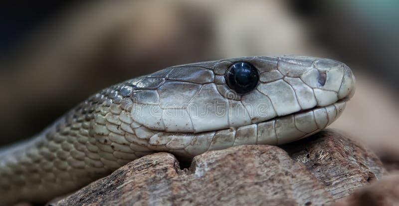 Snake close up stock image