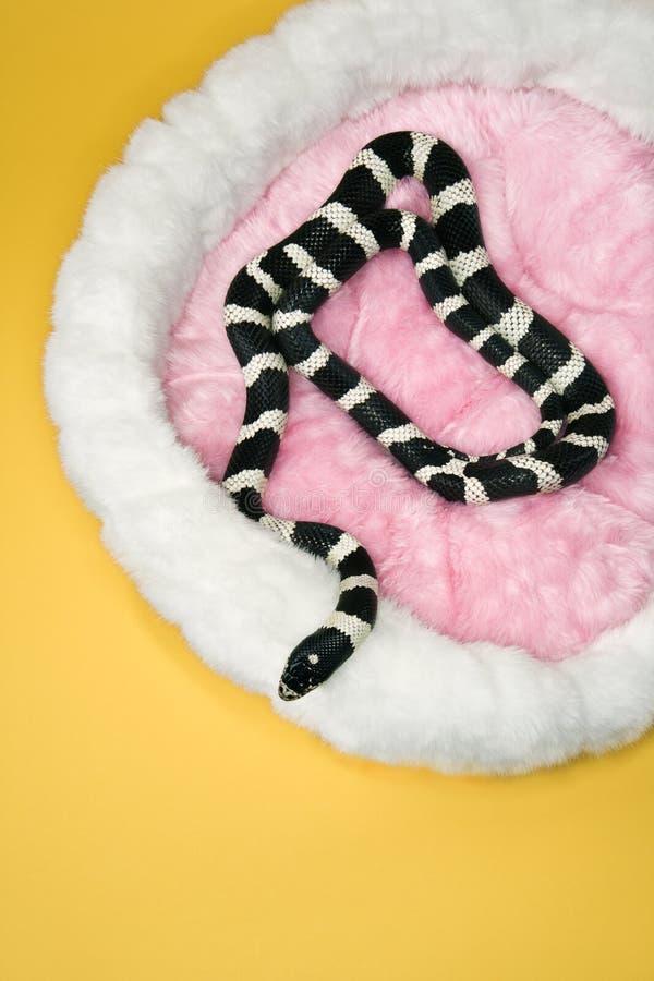 Download Snake in furry pet bed. stock photo. Image of snake, habitat - 2045374