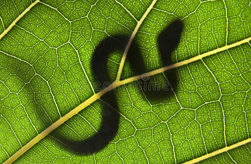 Snake On A Green Leaf Stock Photo