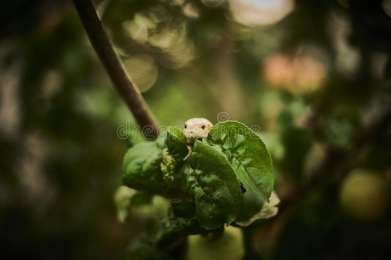 Snake hiding in the leaves stock photo