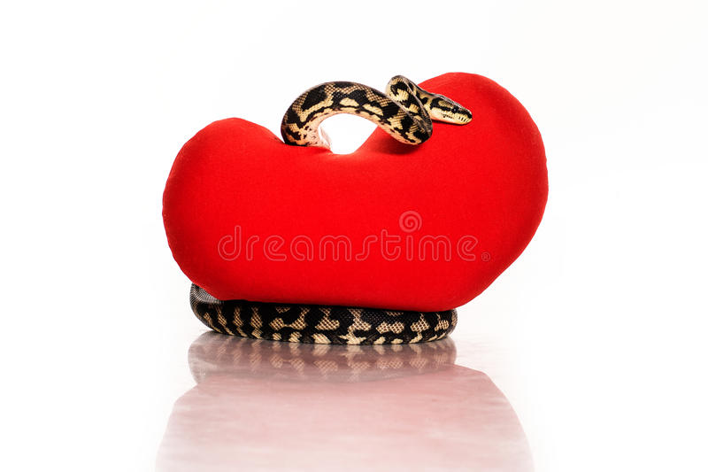 Snake hugging a red heart on a white background. Beautiful snake hugging a red heart on a white background very nice for advertising stock photos