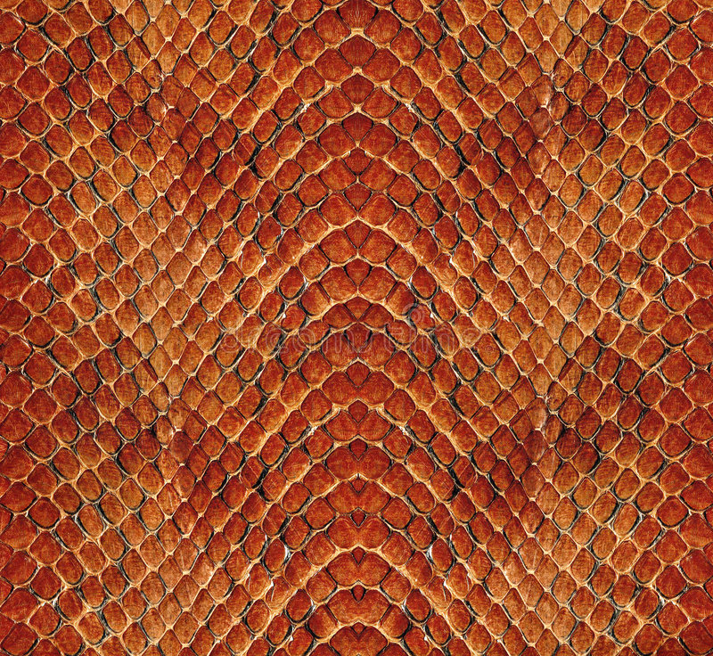 Download Snake leather stock photo. Image of crease, colour, brown - 4769608