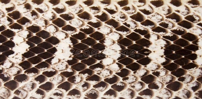 Snake leather.
