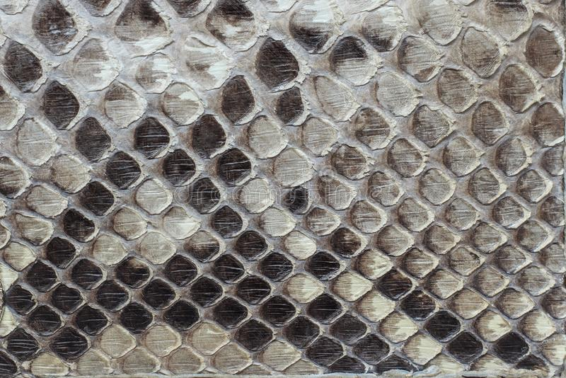 Snake leather as a background or texture. stock image