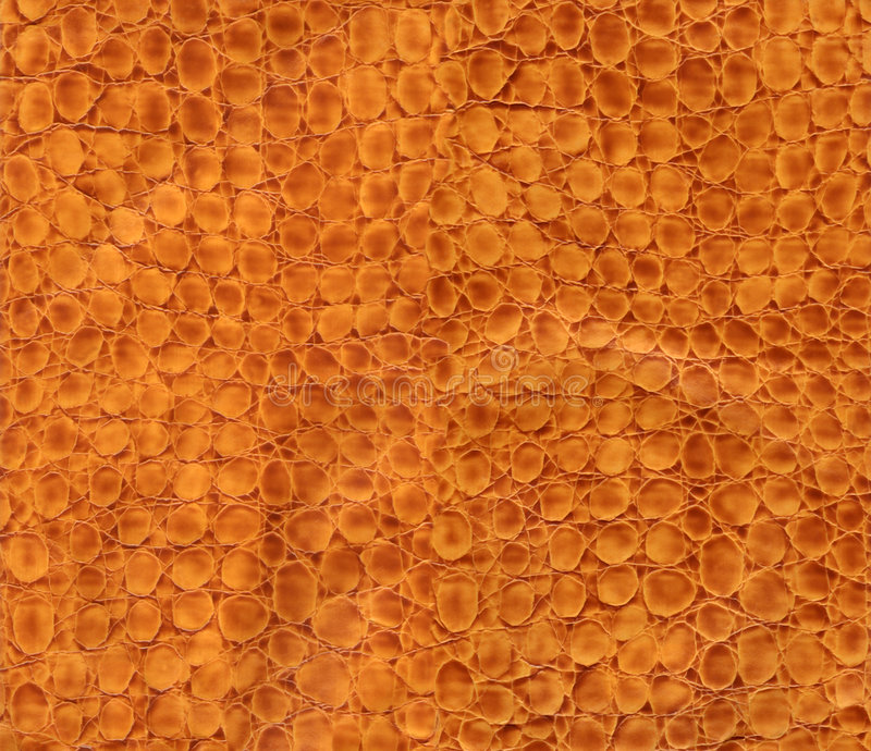 Snake leather texture. HQ snake leather texture to background royalty free stock images