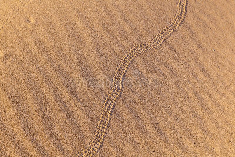 Download Snake Left A Trail In Sand Dune In The Desert Stock Image - Image: 26531421