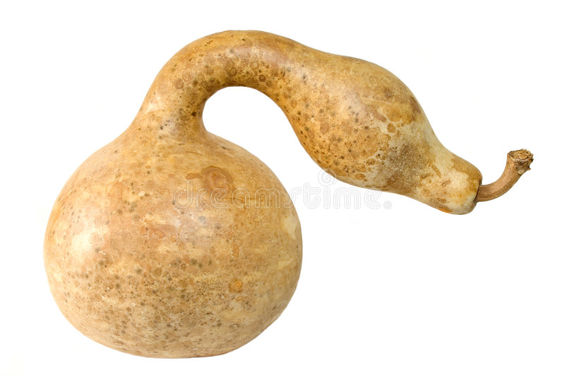 Snake looking Gourd royalty free stock photo