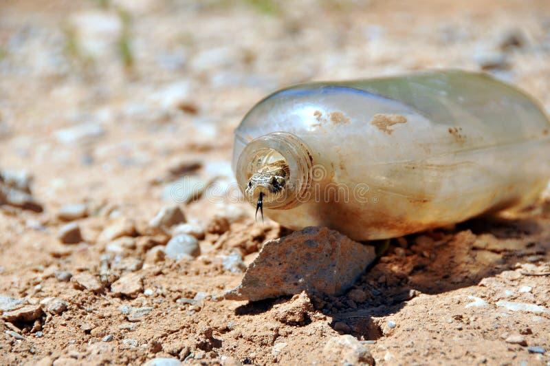 Download Snake in old bottle stock image. Image of nose, captured - 16078919
