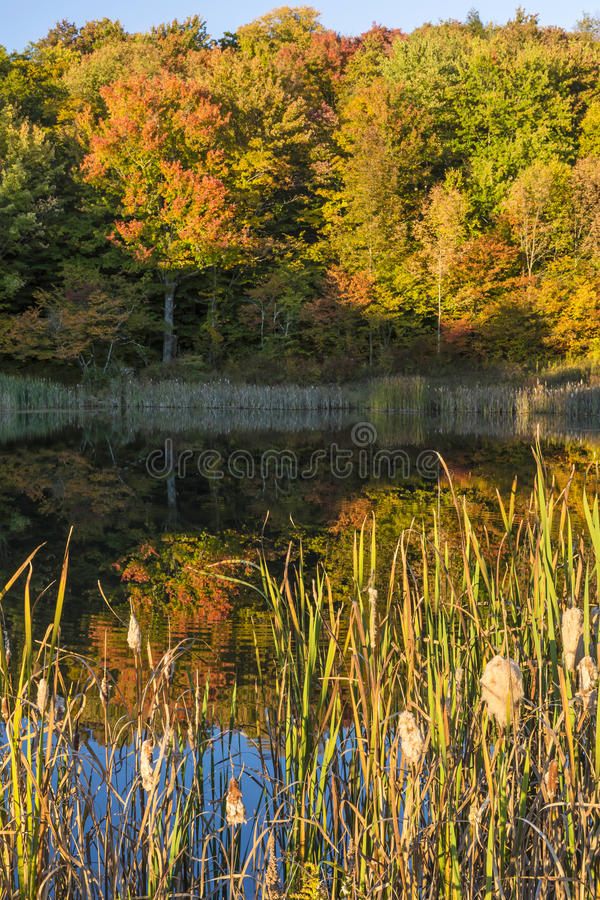 Free Snake Pond Cattails And Autumn Reflections Stock Photos - 79223583