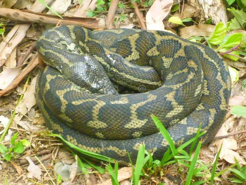 Snake, Reptile, Scaled Reptile, Terrestrial Animal Free Public Domain Cc0 Image