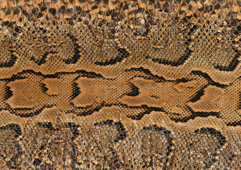 Snake skin. Close up of a snake skin royalty free stock photos