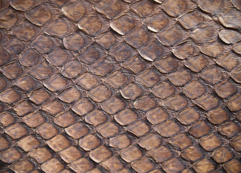 Snake skin. High quality brown snake skin background royalty free stock image