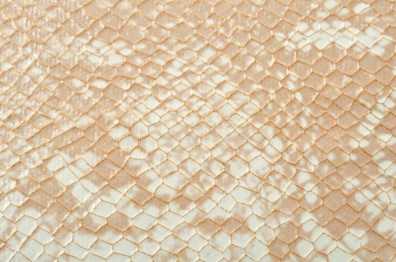 Download Snake skin stock image. Image of burmese, horizontal - 24043753