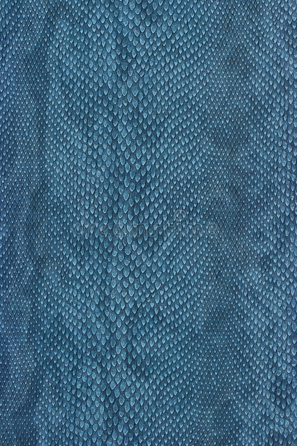 Snake skin. Texture blue for background royalty free stock image