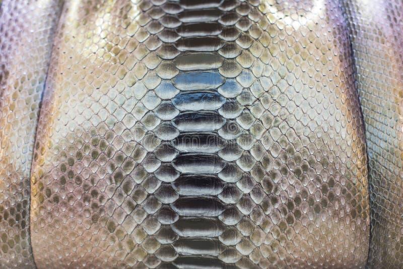 Snake Skin Royalty Free Stock Image