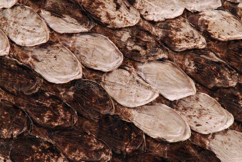 Download Snake skin stock image. Image of scales, background, conservation - 5230941