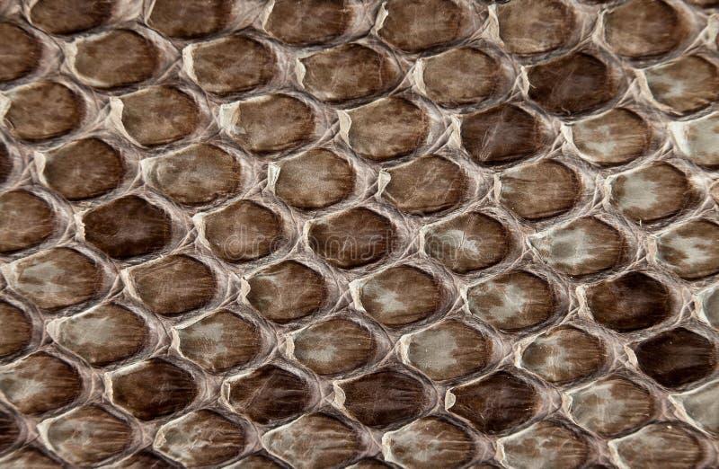 Snake skin. Background snake skin animal dekor royalty free stock photo