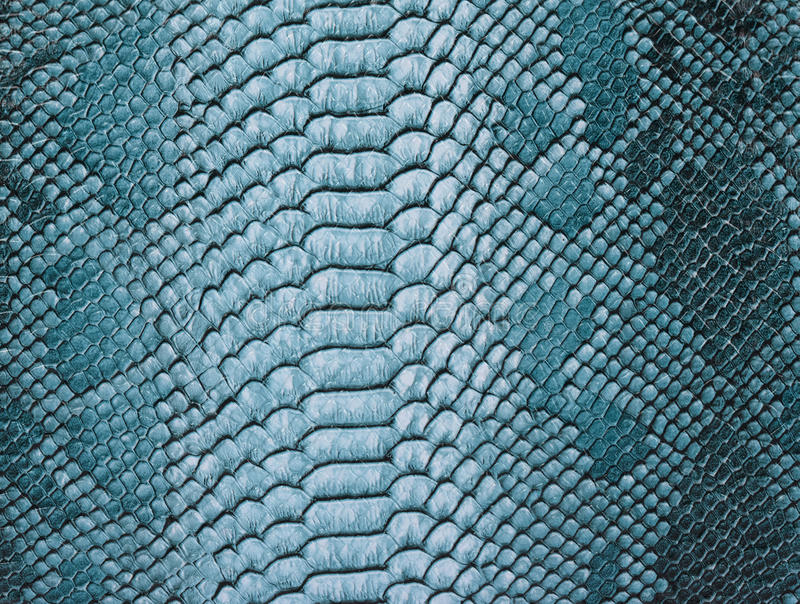 Snake skin background. Close up stock images