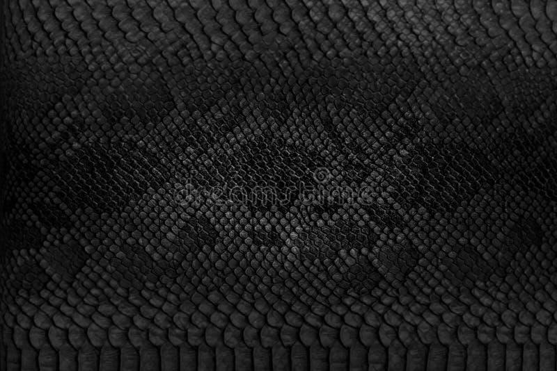 Snake skin background. Close up royalty free stock photography
